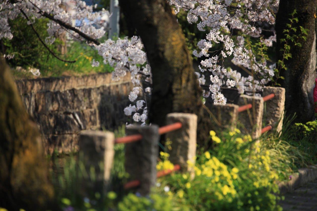 散歩道の春