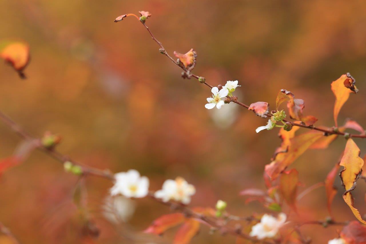 秋彩に春花が