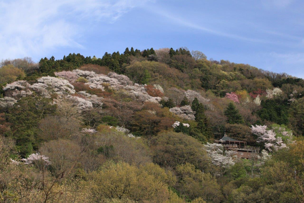 青雲と行く春の山寺