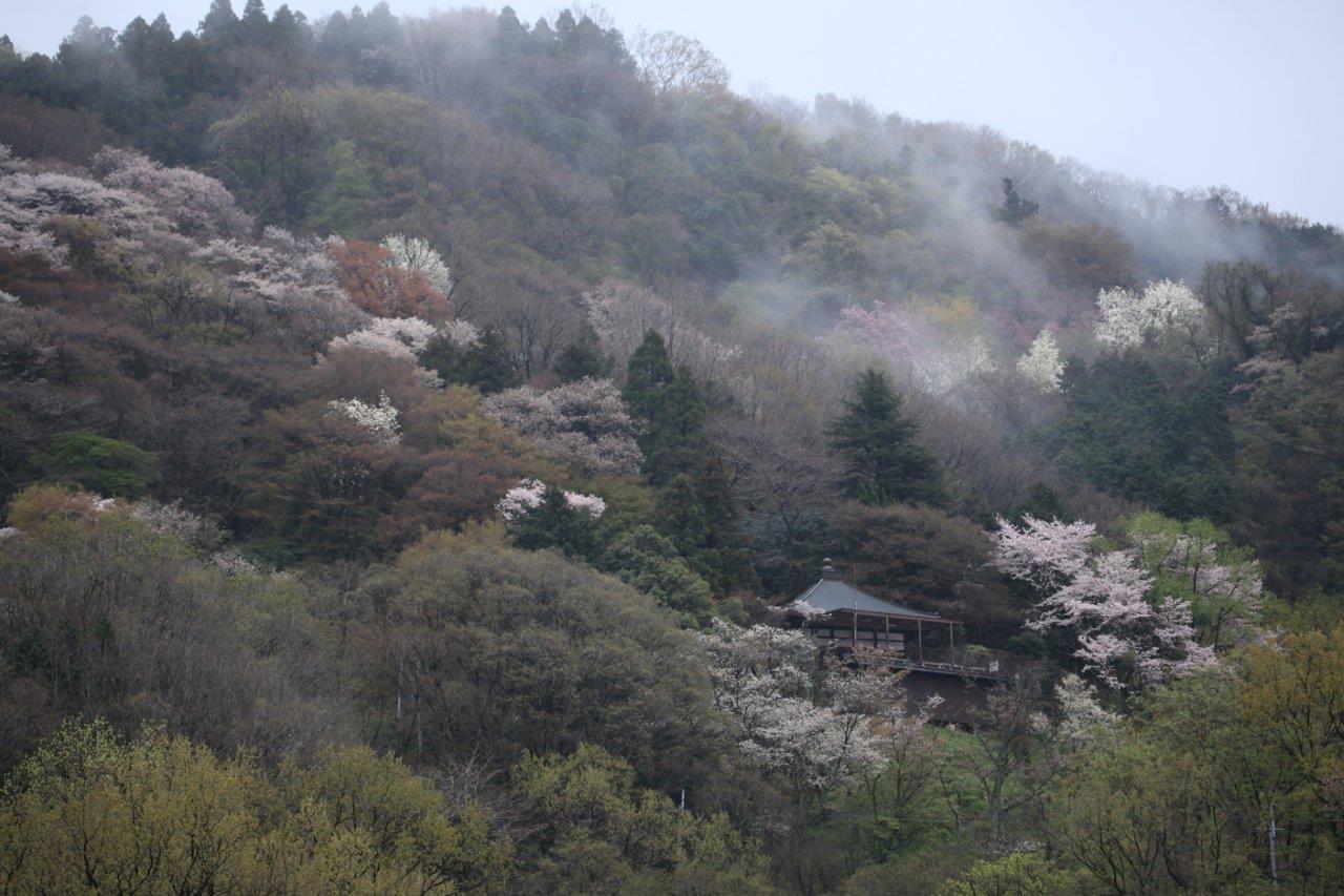春雨の山寺