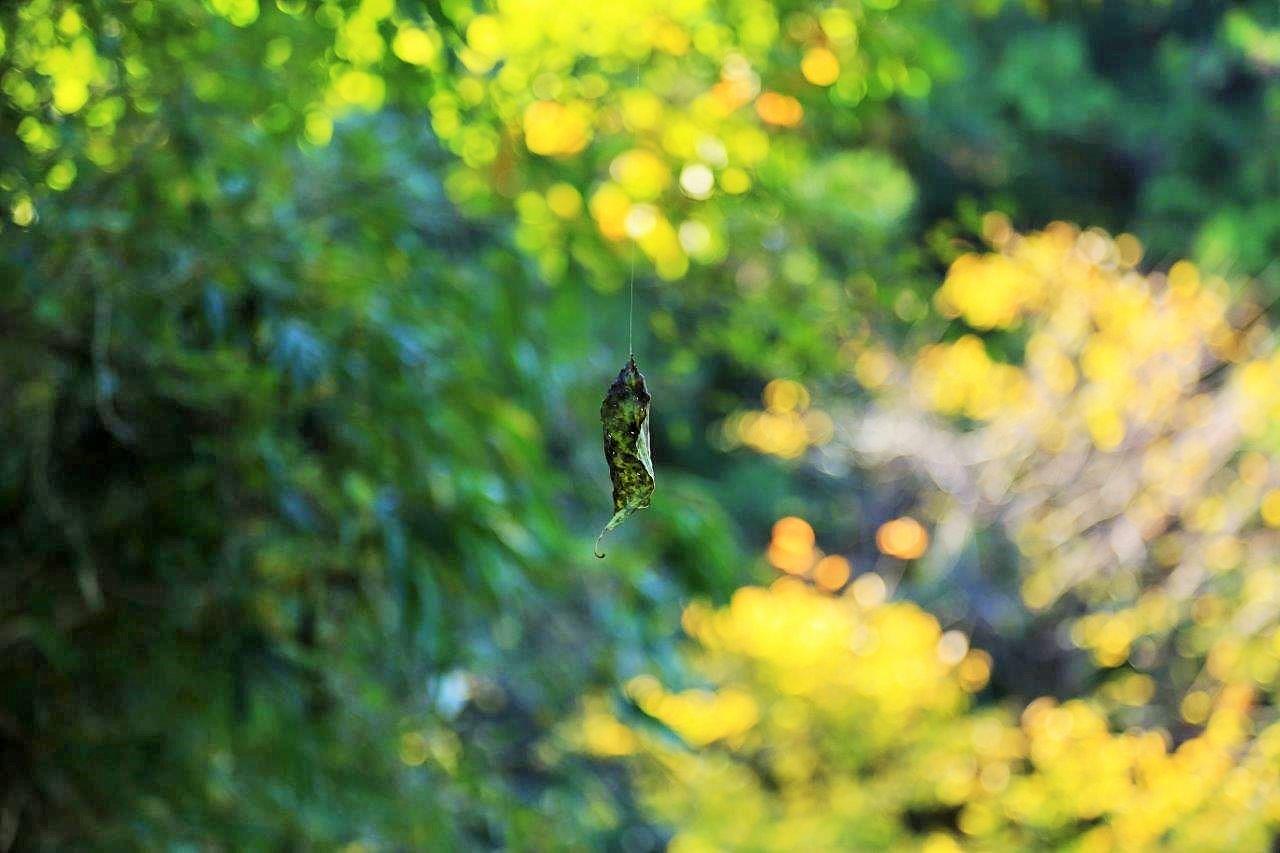 輝く秋色と舞う枯葉