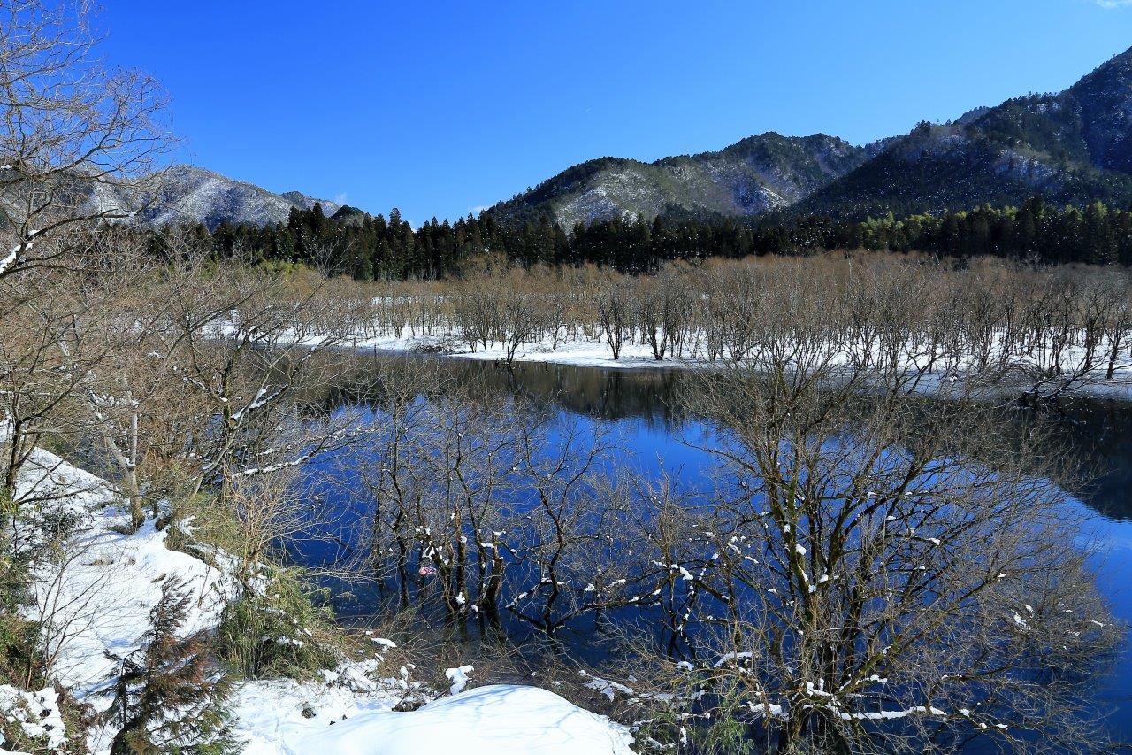 川添の雪林
