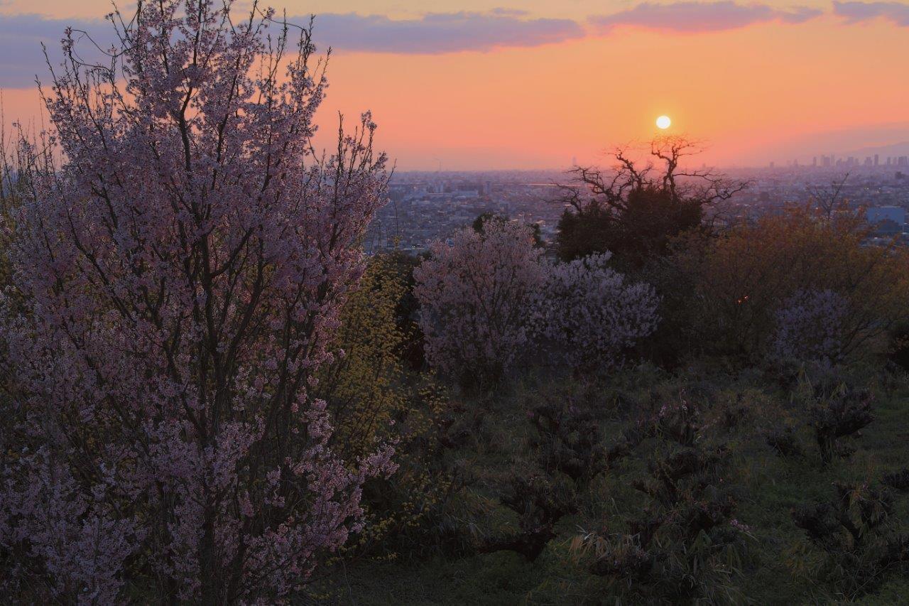 花咲里の夕景