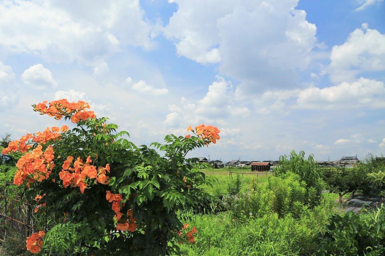 雲わく空と赤花