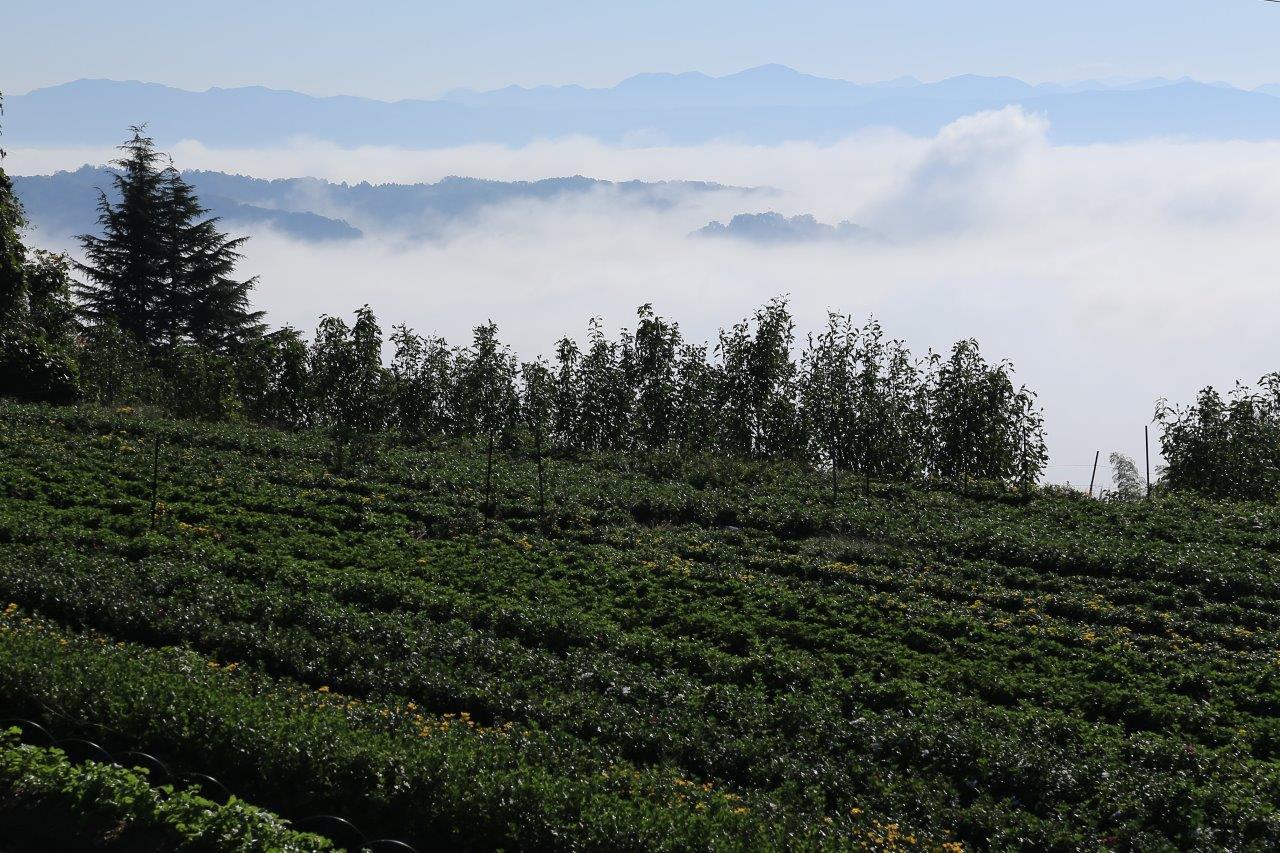 雲海と里畑