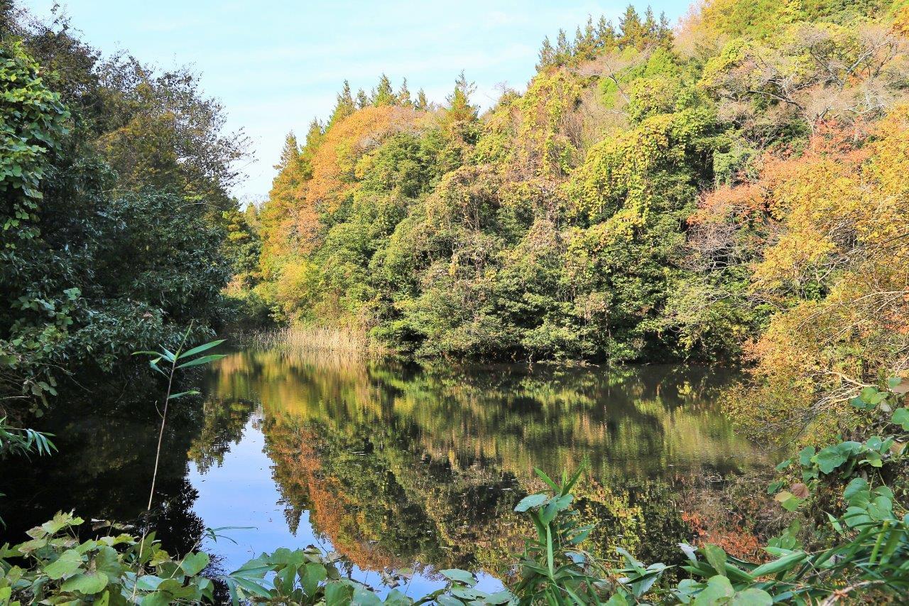 秋色を移す山池