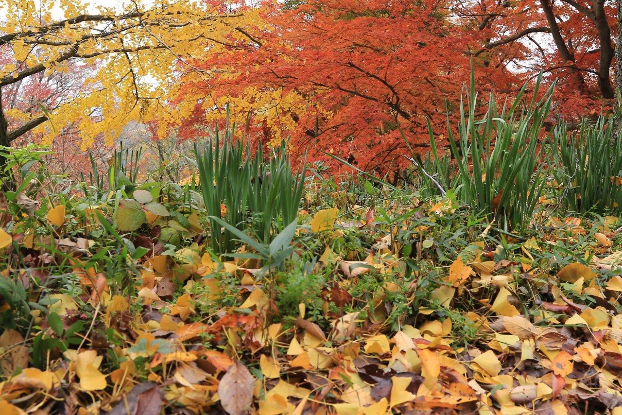 秋を演じる