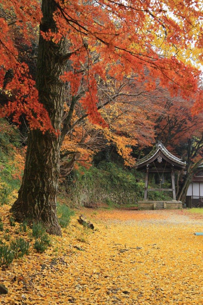 晩秋の鐘桜