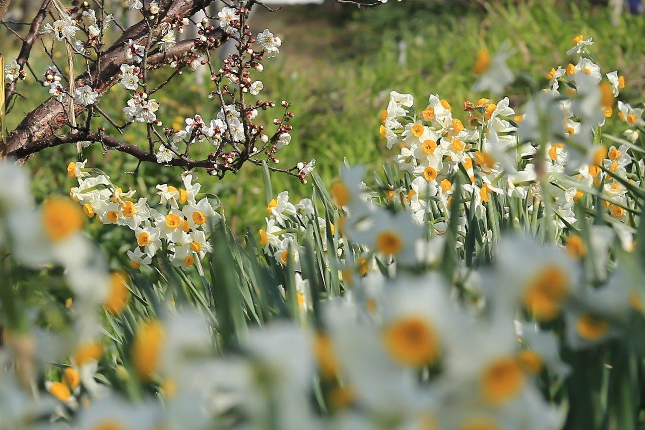 里にも春が